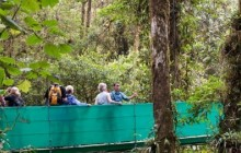 Monteverde One-Day Tour From Arenal: Hanging Bridges or Ziplining
