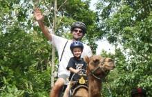 Ocho Rios Outback Adventure with Camel Ride