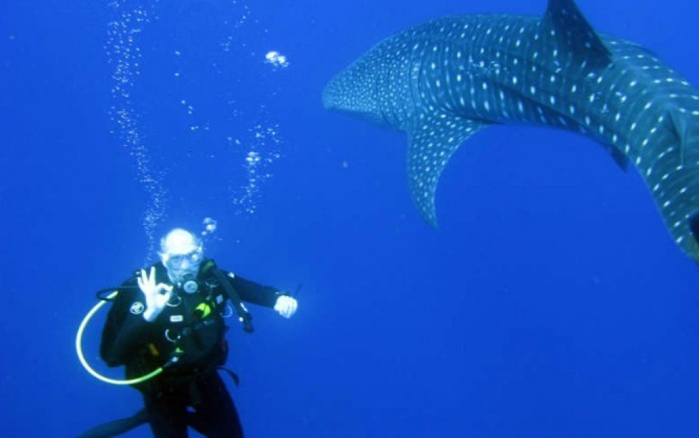 Scuba Dive with Whale Sharks