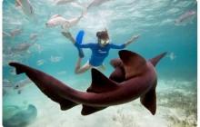 Hol Chan & Shark Ray Alley