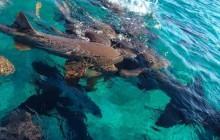 Dive At Hol Chan & Shark Ray Alley