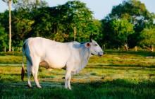San Lorenzo Organic Farm Horseback Ride