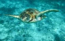 The Ultimate Snorkeling Adventure
