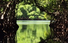 Mangrove Tunnels Eco Tour