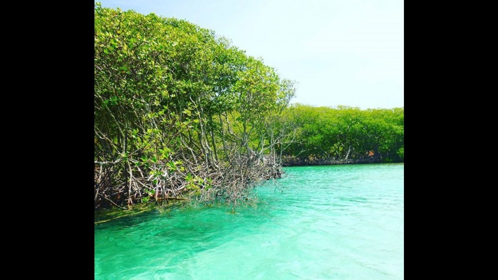 Mangrove & Island Tour