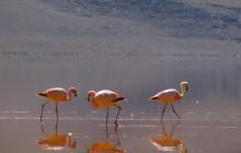 4 Days Andine Desert Experience
