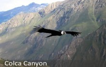 Colca Canyon (From Arequipa To Arequipa) - 2 D - 1 N PRIVATE TOUR