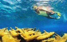 Snorkeling in Cahuita National Park and Jungle Hike