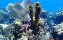 PADI Discover Scuba Diving in Punta Cana