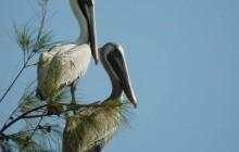 Birding Full Day