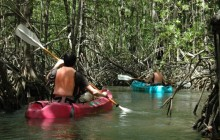 Damas Island Kayaking Tour