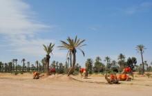 Palmeraie (Marrakesh)