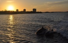 Dolphin and Shelling Cruise at Sunset Tour