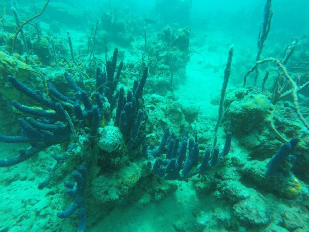 Shashe - 2 Dives
