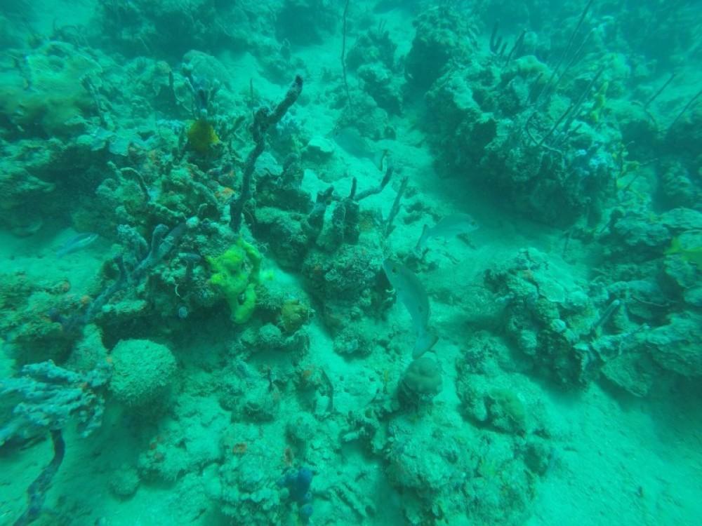 Coral Garden : 2 Dives