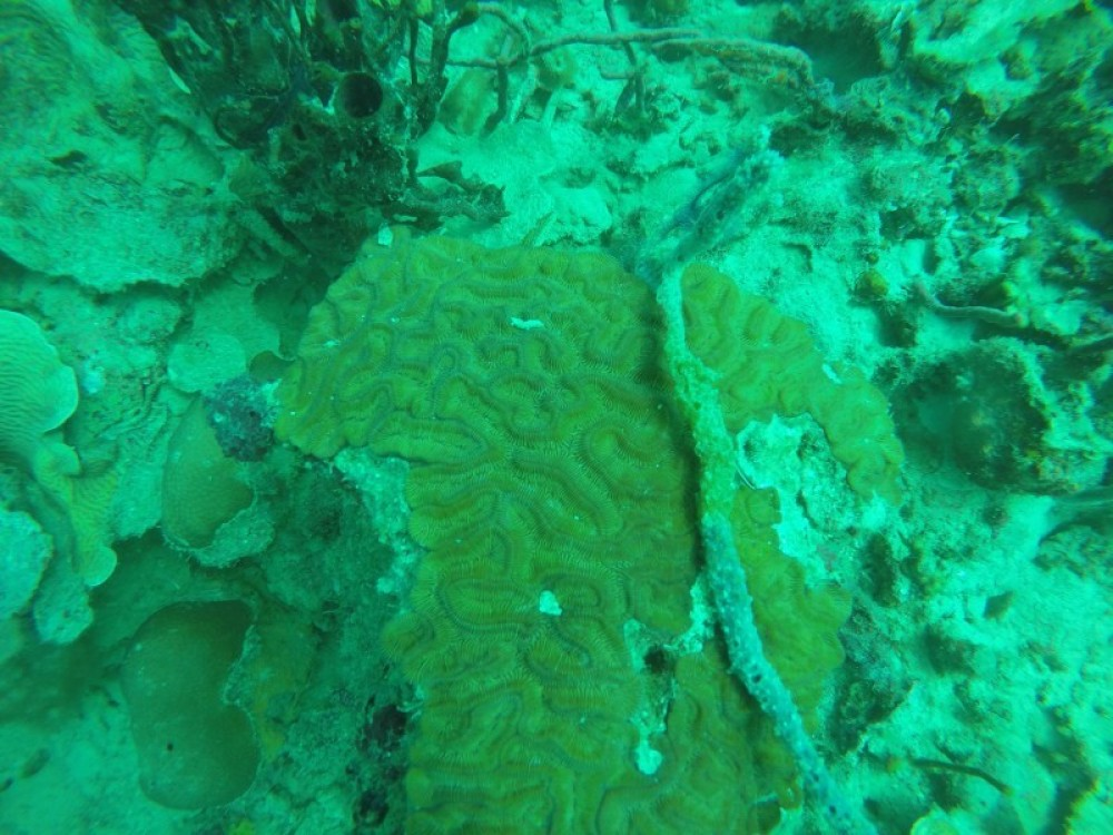 Coral Cay: 2 Dives