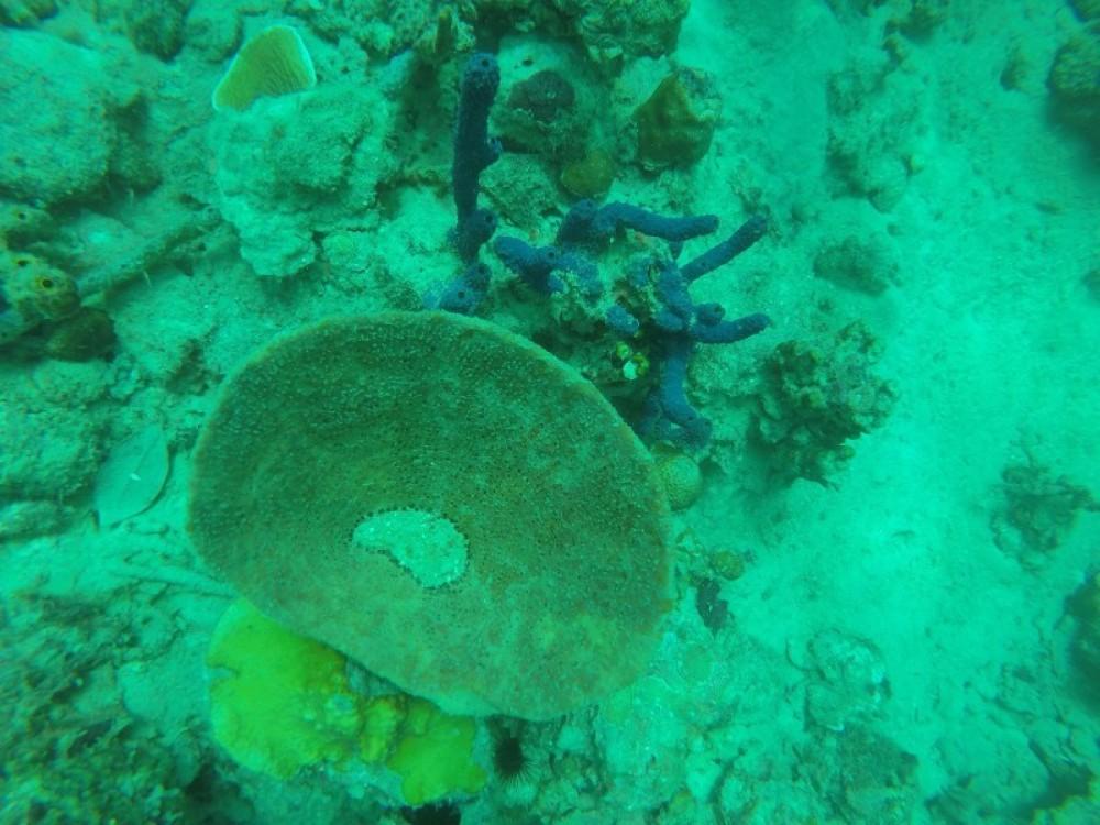 Manuel's Wall: 2 Dives