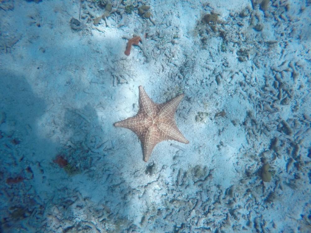 Punta Caracol: 2 Dives