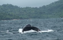 Whale Watching Tour In Panama