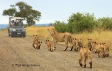 Wild Wings Safaris