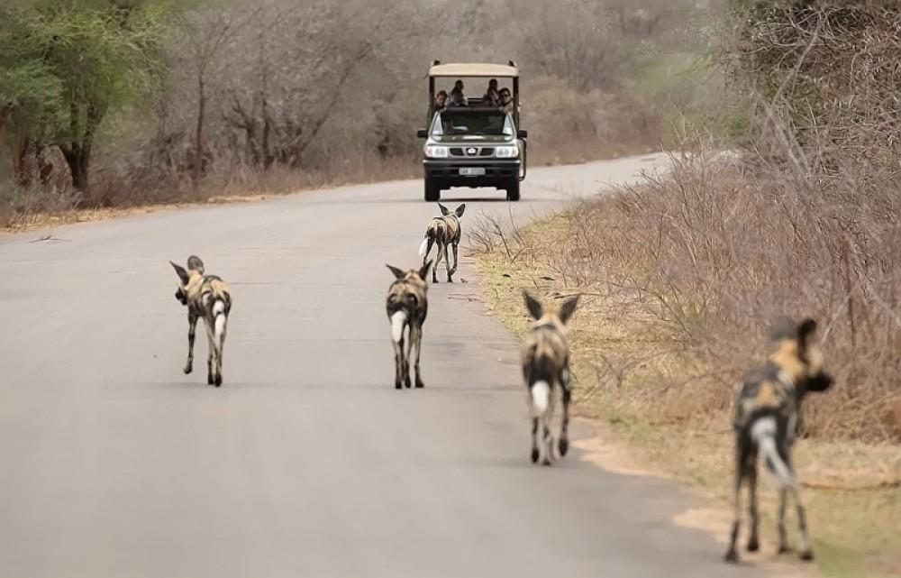 Kruger Budget Safari 3N/4D