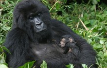 10 Days Explore the Volcanos and Gorilla exprience