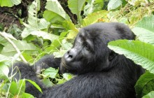 Family Travel to Uganda