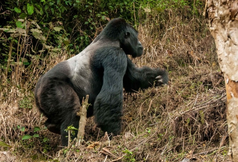 3 Days Flying Gorilla Package to Bwindi National Park
