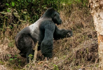 A picture of 3 Days Flying Gorilla Package to Bwindi National Park