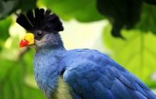 7 Days Birding Tour Special