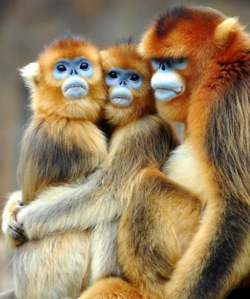 7 Days Gorilla Safari & Primate
