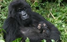 7 days Nyiragongo and Mt. Gorilla trekking Rwanda