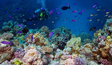 A picture of 4 Days / 3 Night Cod Hole and Ribbon Reefs Dive from Cairns