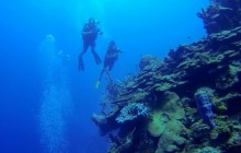 Discover Dive