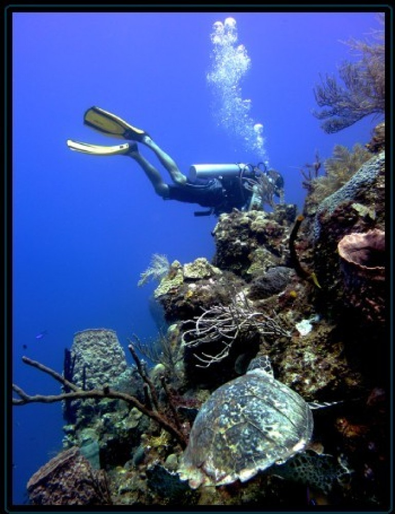 1 to 4 Dives
