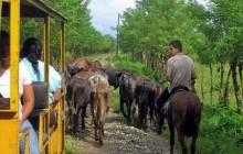 Wildlife Refuge Exploration - Cuero y Salado (Full day)