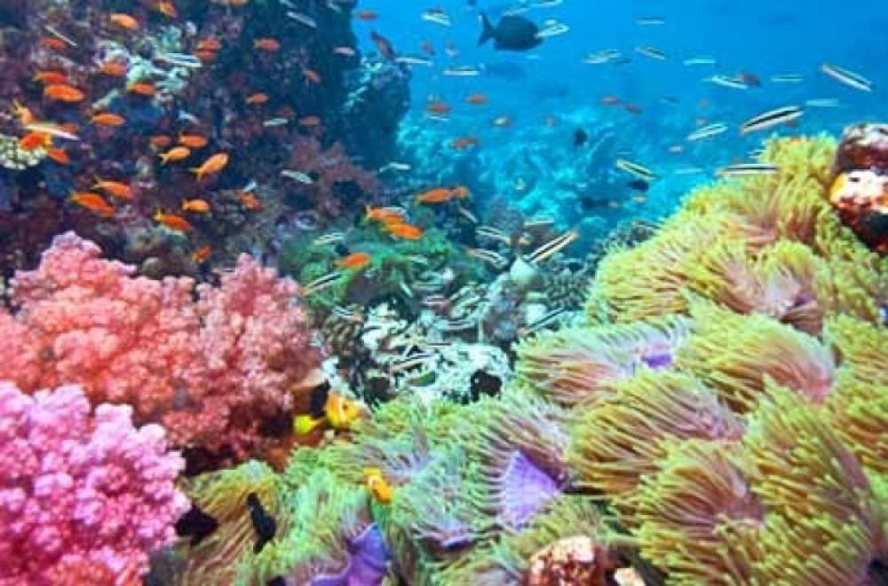 Nassau Reef Snorkeling Excursion