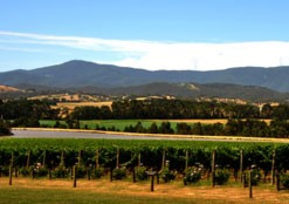 Private Yarra Valley Winery Tour