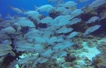 Cozumel World Class Scuba Diving