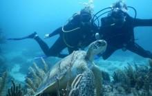 Tulum Reef Scuba Diving