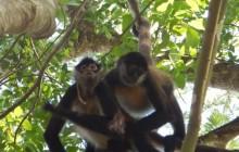 Coba Mayan Ruins + Punta Laguna Monkey Reserve