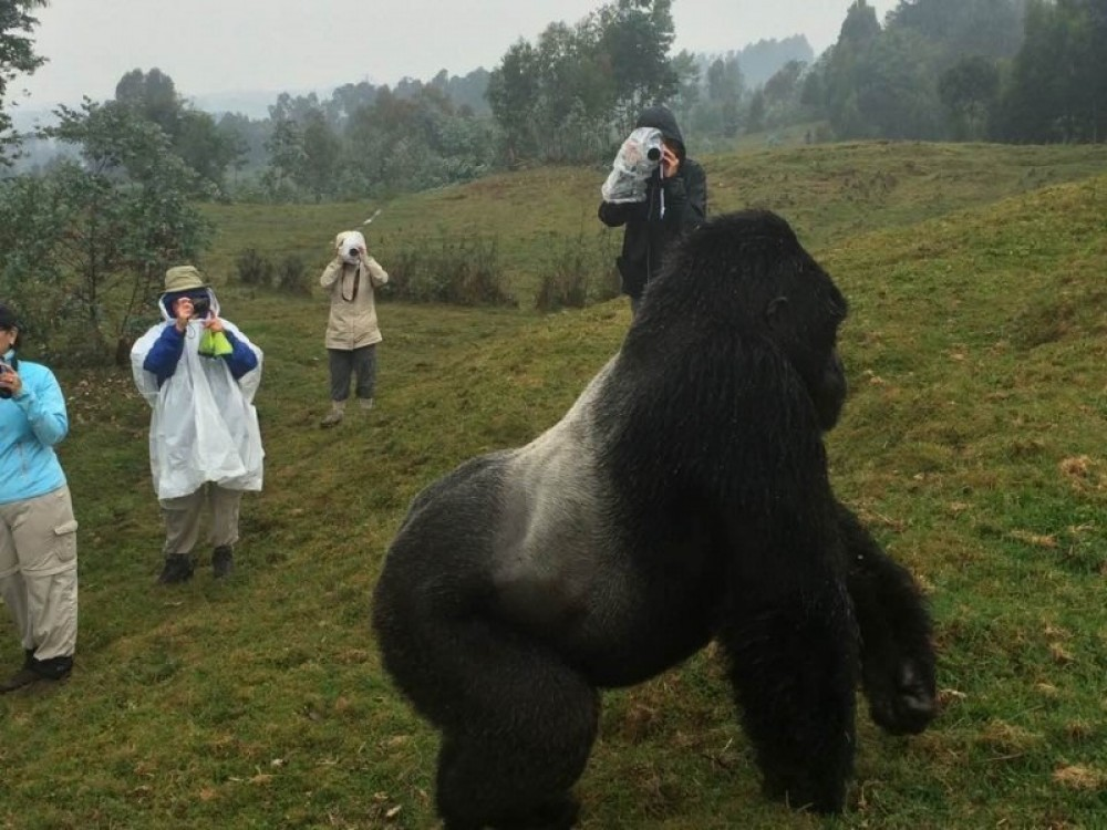 Rwanda & Congo Gorilla Expedition