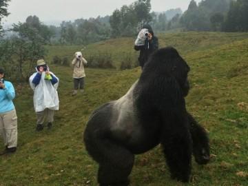 A picture of Rwanda & Congo Gorilla Expedition