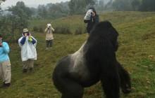 Double gorilla trekking Rwanda and Uganda