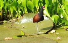 Tobago Wetlands Tour