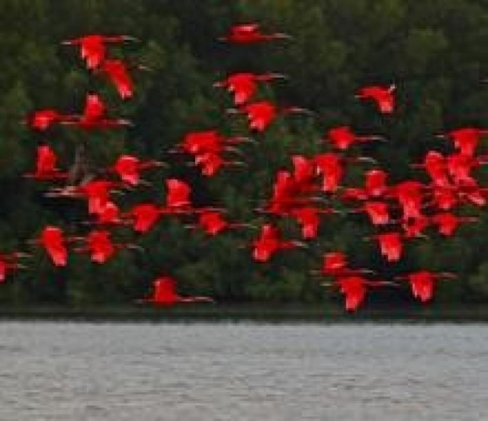 Trinidad Birding Tour