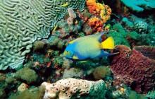 Buccoo Reef Glass Bottom Boat Tour