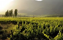 Top 3. The most famous wineries in Maipo Valley