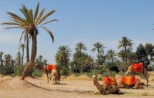 Camel Ride in the Red city Marrakech