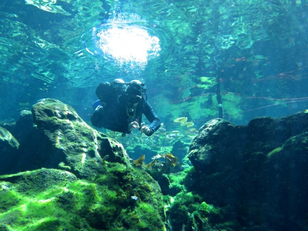 1 Diving In Casa Cenote For A Certified Beiginner's Relative